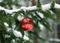 Naturskyddsföreningens bästa tips för en hållbar jul